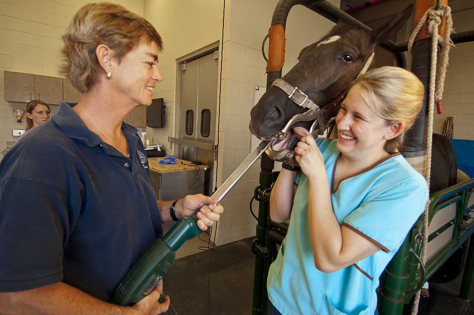 About Us   Countryside Veterinary Services