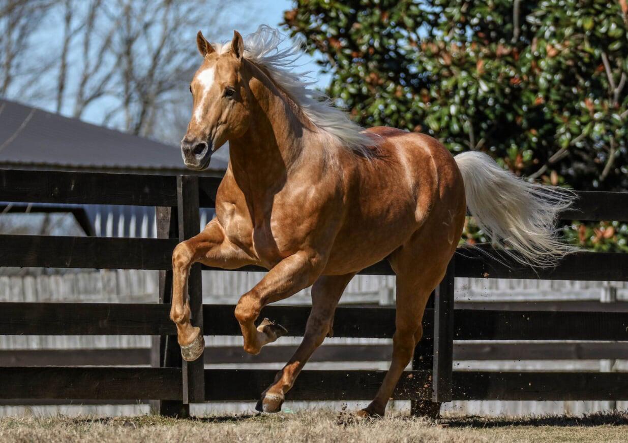 Horses sired by Baskghazi Sire: Baskghazi. Dam: On Tulsa Time.
